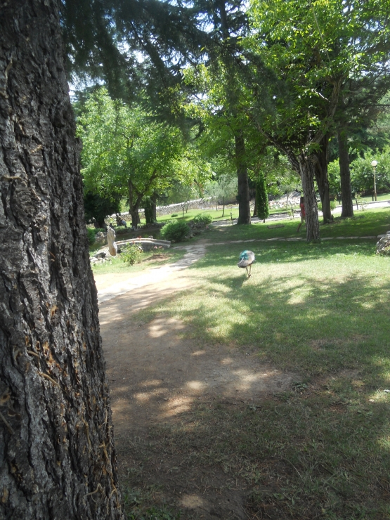 Park in St.Naum in Ohrid