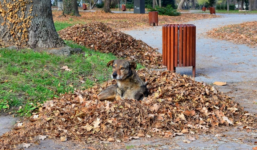 In the park  - stray dog