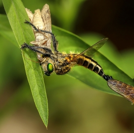 Eating and Mating