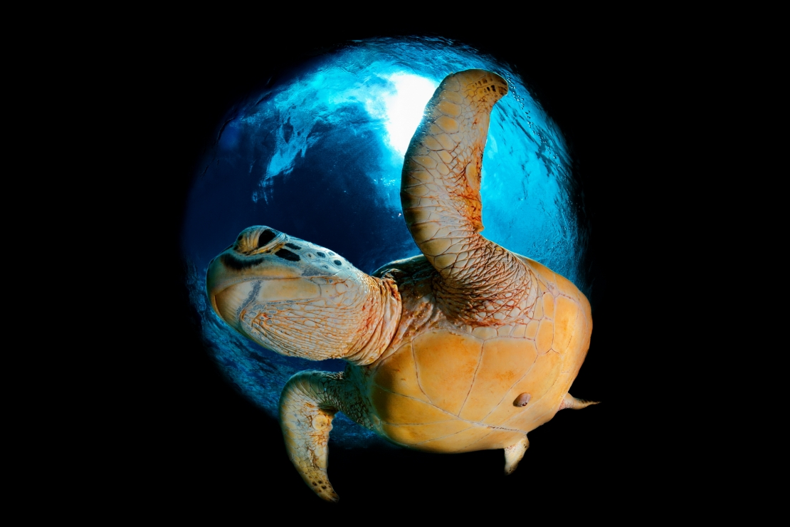 Turtle in the Space