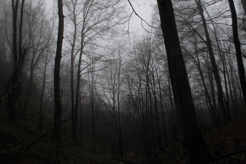 Fog in the woods