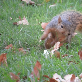 The running Squirrel