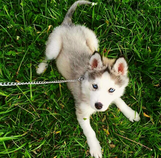 Play in the grass