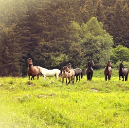 Beautiful sight herd of horses